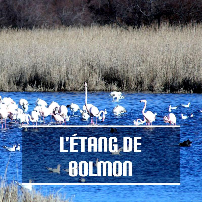 Découverte de L'étang de Bolmon